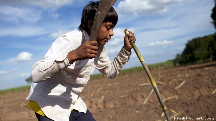 A boy hoists a machete during the sugarcane harvest in eastern Bolivia. (photo: Noah Friedman-Rudovsky)