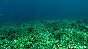 Indonesien Terumbu Karang Korallenrieff