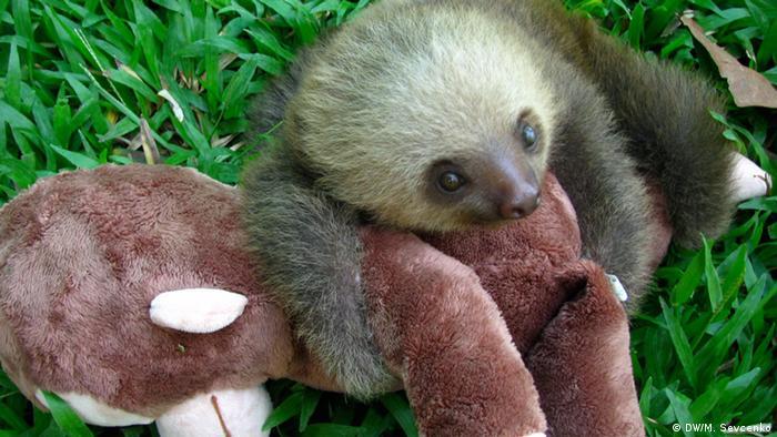Baby sloth and stuffed monkey (photo: M. Sevcenko)