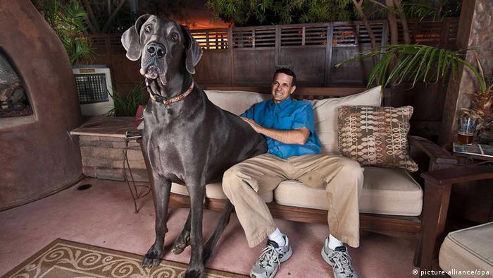 Giant George größter Hund der Welt