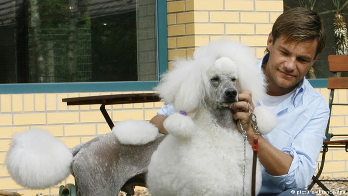 Top Dog Deutschland sucht den Superhund