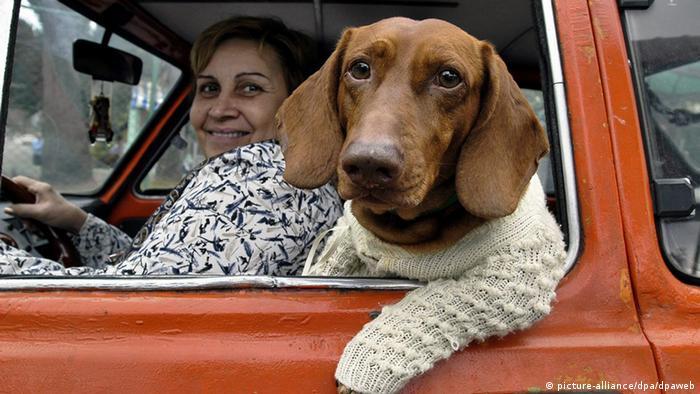 Hund im Pullover