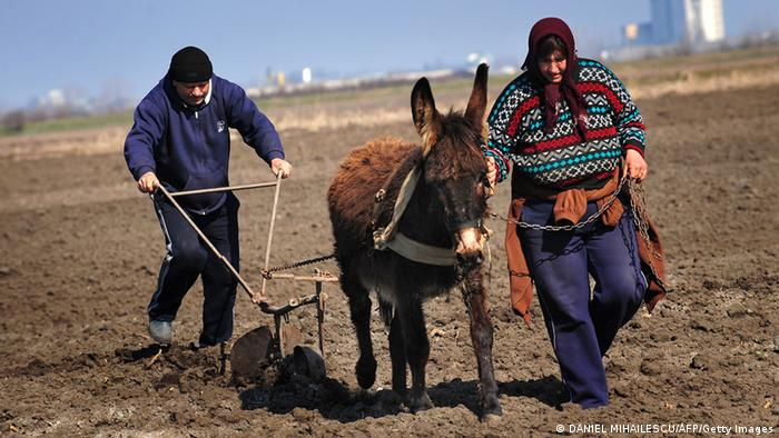 A Romanian couple plows their land with a donkey
