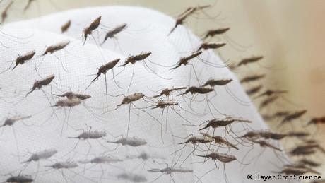 Rede contra mosquito impregnada de repelente