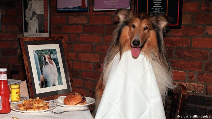 Hund im Restaurant