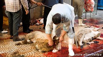 Slaughtering sheep in Cairo