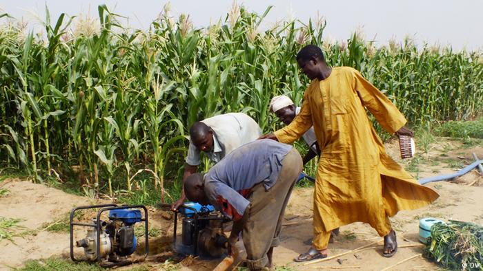 Nigeria Maisfeld Bewässerung