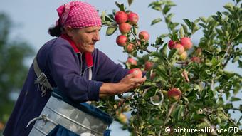 În estul Europei, micii agricultori nu fac față concernelor