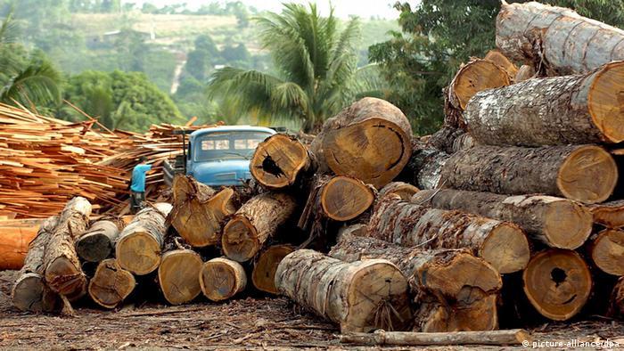 Symbolbild Abholzung der Regenwälder (picture-alliance/dpa)