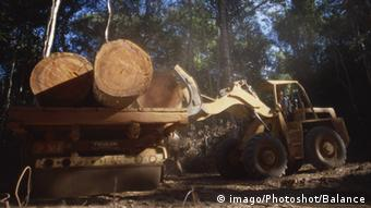 Tree trunks cut down are carried by a tractor. Copyright Imago Photoshot Balance Excavators l