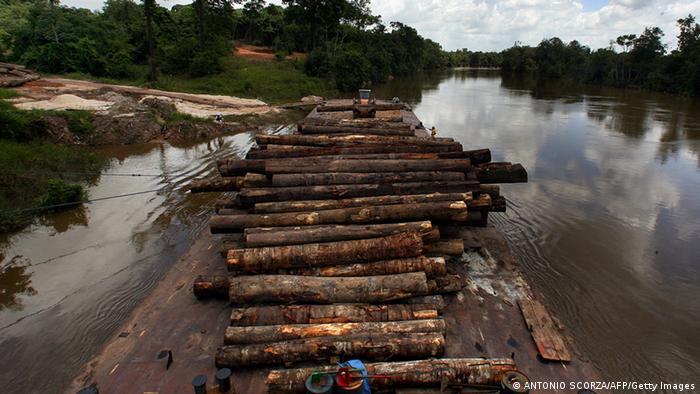 Symbolbild Abholzung der Regenwälder Floß