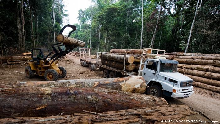 Deforestation in the Amazonas rainforest