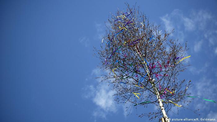 Ein geschmückter Maibaum vor blauem Himmel