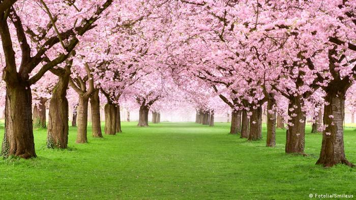 #49588755 - Fotolia.com - Gartenanlage in voller Blütenpracht © Smileus
