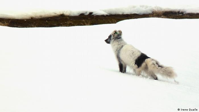 Spitzbergen 2010