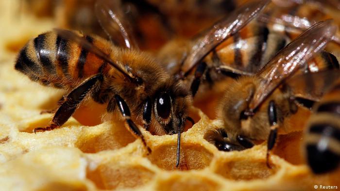Frankreich Bienen (Reuters)