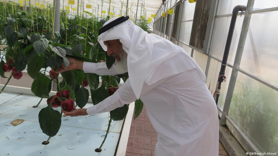 Aquaponics expert brings sustainability to the desert