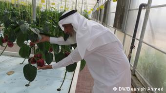 Jabber Al Mazroui, 55, tends to plants in his aquaponics facility (Foto: Beenish Ahmed)