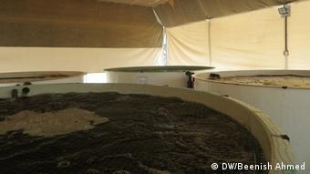 Tilapia Fischbecken in einer Aquaponik-Anlage in Abu Dhabi, Vereinigte Arabische Emirate, Januar 2013 (Foto: Beenish Ahmed)