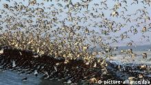 Bildergalerie Zugvögel