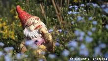 Ein Gartenzwerg mit Sonnenbrille sitzt am 22.04.2013 zwischen Blumen in einem Schrebergarten in Mainz (Rheinland-Pfalz). Im Bundesverband Deutscher Gartenfreunde (BDG) sind nach eigenen Angaben rund 1 Millionen Pächter von Kleingärten organisiert. Die rund 15.000 Vereine teilen sich eine Fläche von bundesweit insgesamt 460 Quadratkilometern. Foto: Fredrik von Erichsen/dpa (zu lrs-Umfrage Kleingärten in Rheinland-Pfalz sind voll besetzt vom 27.04.2013) +++(c) dpa - Bildfunk+++