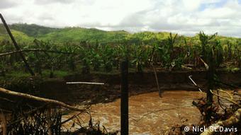damaged trees Copyright: Nick St. Davis, DW Mitarbeiter, Jamaica, April 2013