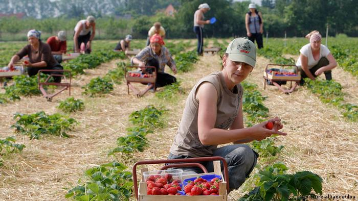 Seasonal workers on a field