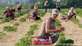 Сезонним працівникам дозволялось працювати у ЄС максимум шість місяців