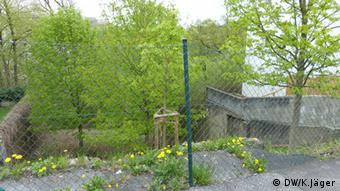 (Photo: Karin Jäger/ DW) Five green chestnut trees stand enclosed behind a fence.