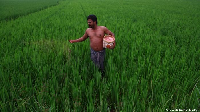 Farmer uses fertilizer in India