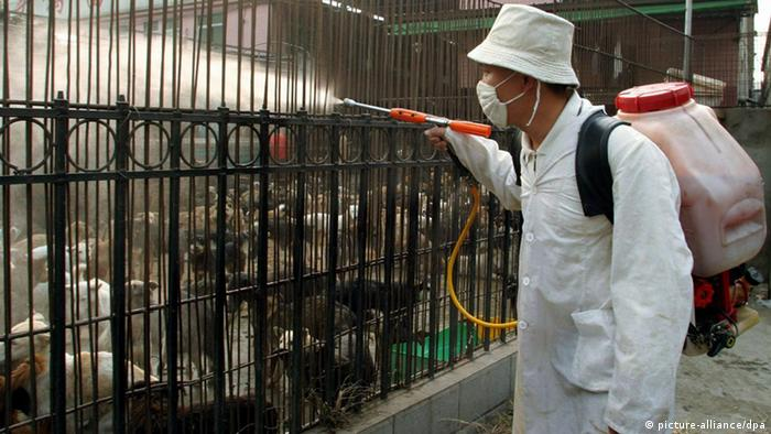 SARS Bekämpfung China Tiere