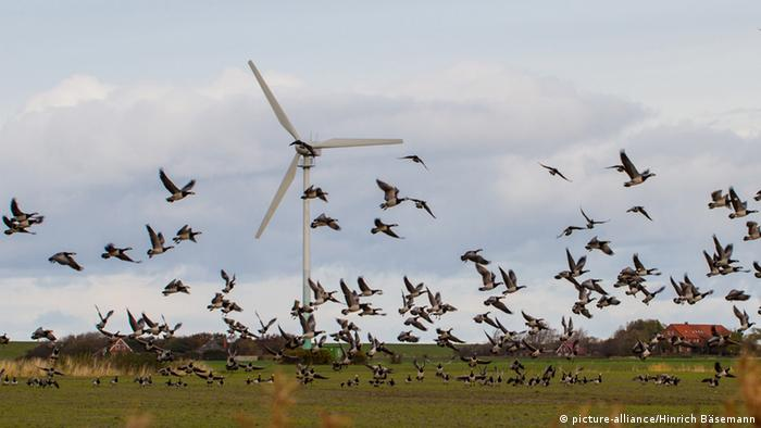 A flock of wild geese fly past wind turbines in Europe