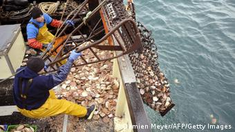 Fishermen pour sea scallops from trawler drag chains on the deck of their boat, off the fishing port of Erquy, western France on November 16, 2011 during the scallops (Pecten Maximus) fishing season. AFP PHOTO DAMIEN MEYER (Photo credit should read DAMIEN MEYER/AFP/Getty Images)
