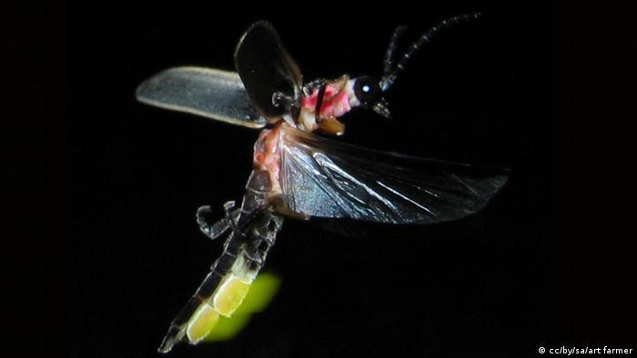 Kunang-kunang cahaya alat komunikasi
