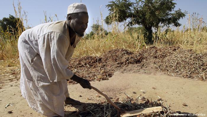 Ein sudanesischer Bauer drescht am 10.12.2007 auf einem Feld nahe der Stadt bei Mukjar in West-Darfur im Sudan Sorgum-Körner (eine Hirseart).