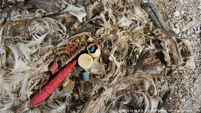 Останки альбатроса