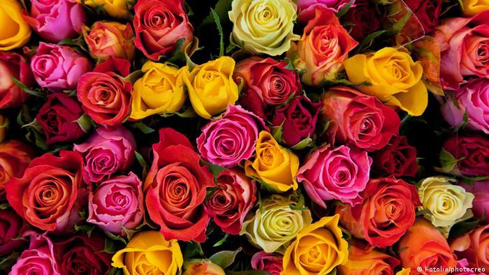 Cada flor tiene su precio   Economía   DW   14.02.2015