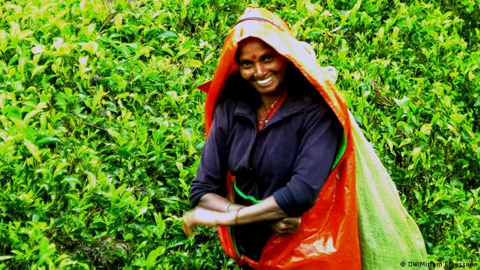 A woman in a Ceylon tea plantation (Photo: DW/Miriam Klaussner)