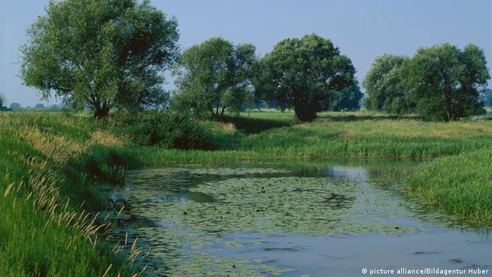 Flussaue Elbe Elbaue Tangermünde Sachsen-Anhalt