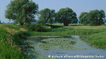 Flussaue Elbe Elbaue Tangermünde Sachsen-Anhalt (Foto: picture alliance/Huber)