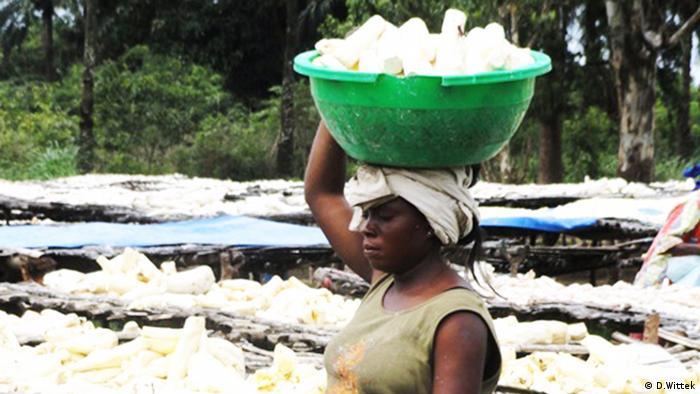 Maniok in der Demokratischen Republik Kongo (Foto: D.Wittek)