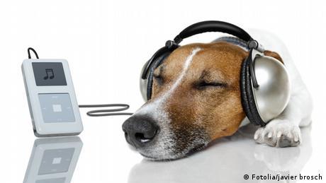 Hund mit Kopfhörern (Fotolia/javier brosch)