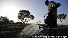 Symbolbild Afrika Anbau Wasser