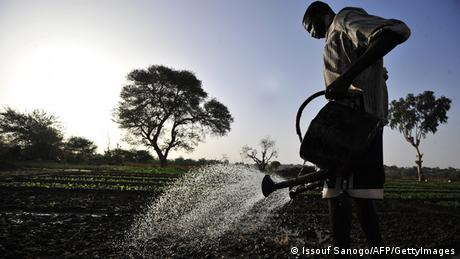 Agricultor no Niger