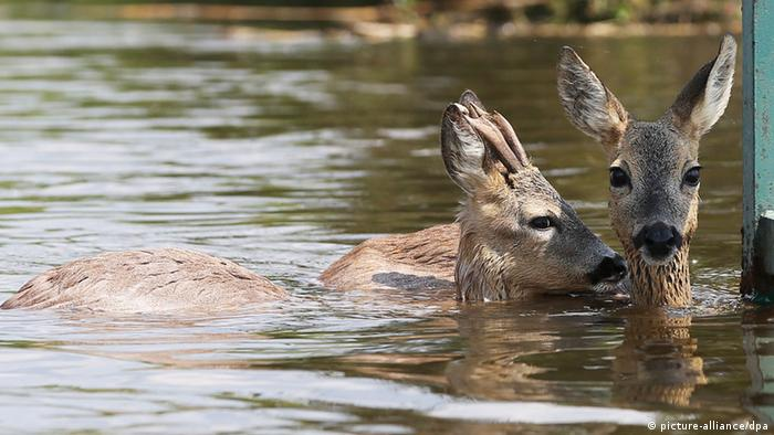 Two deer standing in the water (photo: Christian Charisius/dpa)