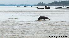 Delphine im Ganges Bangladesch