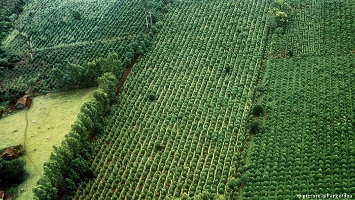 Landwirtschaft Brasilien - Kaffeeanbau