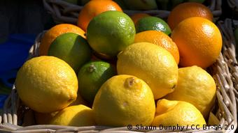 Πορτοκάλια λεμόνια λάιμ