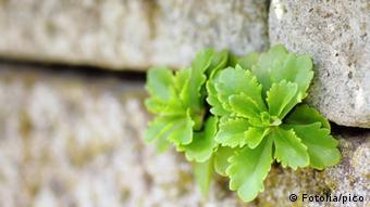 Eine Pflanze in einem Mauerspalt