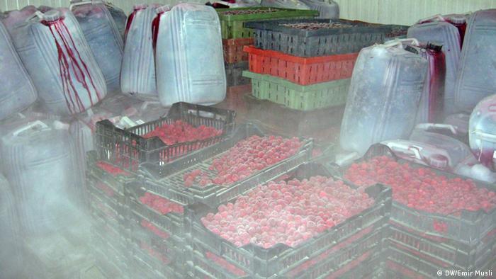 Maline u hladnjači Voćara čekaju na transport